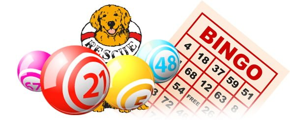cara main bingo